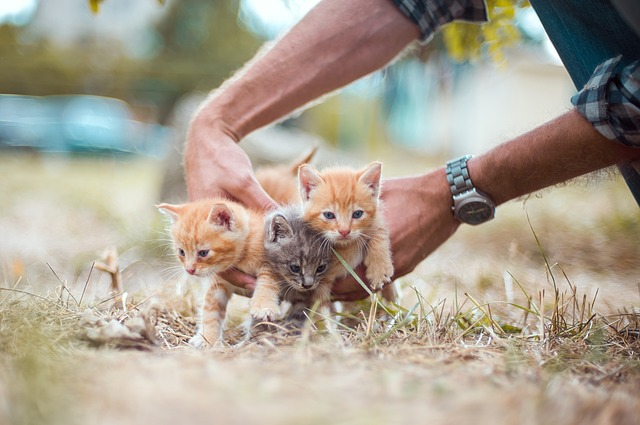 kittens-4020199_640